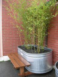 Think outside the box - bamboo is a unique plant - use the recommendations  above, but get creative and bring out the best in your beautiful, unique  bamboo.