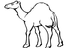 Small Picture Coloring Page Camel coloring pages 8 Clip Art Library