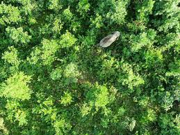 Assamese Flower Chart Assam Environment Ngo Forum Latest News Videos Photos