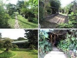 bonsai gardens. Bonsaigarden.jpg. The UP Bonsai Garden Gardens