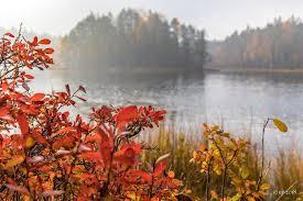 """Uživatel Ulla Vornanen na Twitteru: """"* Tänään #Klassarinkierros  #Nuuksio'ssa. Aamun sumupilvi oli juuri väistymässä tätä kuvaa kuvatessa.  Ihana syysruska 🧡 * #ruska #fallcolors #luonto #nature #kansallispuisto  #nationalpark #Suomi #Finland ..."""