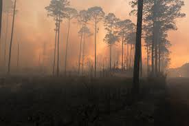 West Mims Fire Activity Falls Allowing Okefenokee National