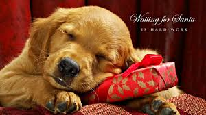 cute merry christmas wallpaper dogs. Brilliant Dogs Cutemerrychristmaswallpaperdogsdjfdpwsu In Cute Merry Christmas Wallpaper Dogs