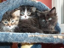 bébé chaton a donner 2016