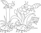 Раскраски пчелки бесплатно