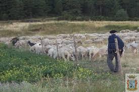 Resultado de imagen de imagenes de pastores actuales de ovejas