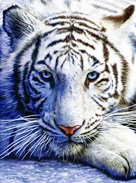 white tiger. Interesting Tiger White Tiger Face 1000 Pc Jigsaw Puzzle On E