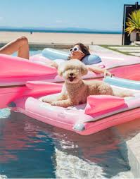 pool floats for dogs. Contemporary Floats Living In South Florida I Really Didnu0027t Think Could Get Very Excited  About A New Pool Or Beach Accessory Because Thought Iu0027d Seen Them All Giant  In Pool Floats For Dogs P