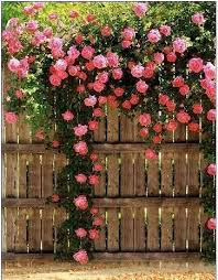 Landscaping Ideas For Your Property Fences Attractive Climbing Climbing Plants For Fence