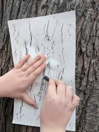 In Your Backyard: Looking Closely at Tree Bark – University Housing –  UW–Madison