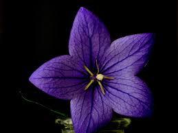 Flower Plant Blue Free Photo On Pixabay
