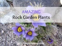 best garden plants. Best Rock Garden Plants