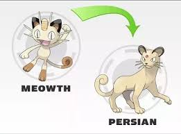 Pokemon Beedrill Evolution Chart What Does Persian Evolve Into In Pokemon Quora