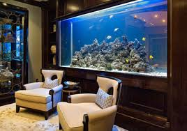 Fish tanks at home serve multiply purposes. They have to be cleaned  constantly and feed appropriately. Look back at any well kept wall aquarium  and you will ...