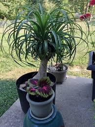 diy moving indoor plants outside low light outdoor southern california houseplants australia uk pictures florida
