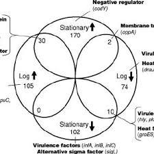 Dna Rna Venn Diagram Transcription And Translation Venn Diagram Wiring Diagrams