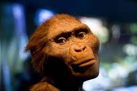 at Lake Turkana, Predate Early Humans ...