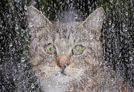 cat in the rain essay poem for today pawprints and raindrops the  smartsense motion sensor smartthings smartthings the missing cat