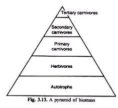 energy flow in an ecosystem  with diagram a pyramid of biomass