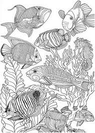 Fish Coloring Pages Colouring Adult Detailed Advanced Printable