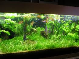 Mario Brothers Aquarium Decorations 17 Best Images About Tanked On Pinterest Cool Fish Tanks
