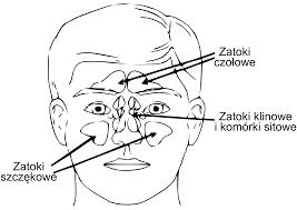 Znalezione obrazy dla zapytania jama nosowa ang