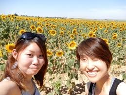 the sunflower fields of carmona spain why are the anese so obsessed with spain s sunflowers in english el paÍs