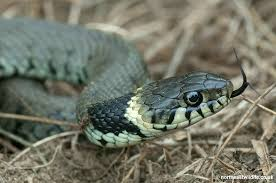 snake back gr snake snake io cool math games