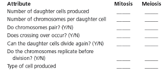 Mitosis Meiosis Differences Chart List The Differences Between Mitosis And Meiosis In Bartleby