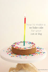How To Make A No Bake Cake For Your Cat Or Dog Created By Diane