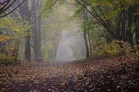 Parkerkundung - Bild \u0026amp; Foto von Hans Schönberg aus Herbst ... - Parkerkundung-a32545159