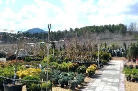 mountain view garden center mountain view garden supply gardens highlands cashiers center mountain view garden centre