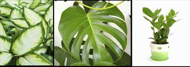 best indoor plants for office. Perfect Office Plants. Plants Ultimate Guide To Plantsrhambiuscom Best Design Images Courtesy Of Indoor For F