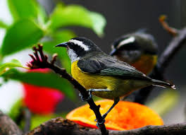 Resultado de imagem para passarinhos