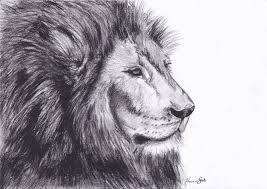 realistic lion face drawing.  Drawing How To Draw Animals Ep 1  Lion YouTube Inside Realistic Face Drawing