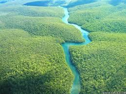 amazon rainforest.  Rainforest Amazonrainforest And Amazon Rainforest F