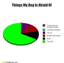 Οι φοβίες του σκύλου......