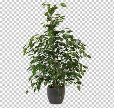 hanging basket houseplant plants flowerpot hirt s gardens png clipart free png