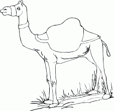 Small Picture Camel Coloring Page 16219 Aouous