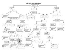 Microbiology Unknown Test Flow Chart 62 Matter Of Fact Gram Stain Flow Chart