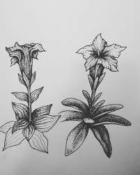 Noirwitch Tattoo Encijan Gentian Gentianaillustration Flower