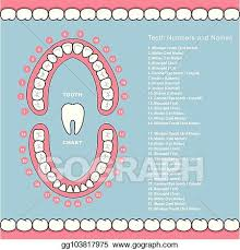 Jaw Chart Eps Illustration Tooth Chart With Names Dental