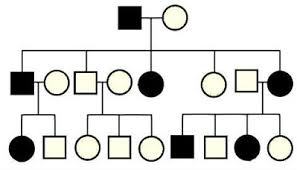 pedigree tree pedigrees for predicting genetic traits