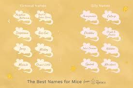 56 <b>Fun</b> and <b>Creative</b> Name Ideas for Pet <b>Mice</b>