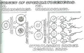 Biology Coloring Pages Cell Phone Coloring Pages Free