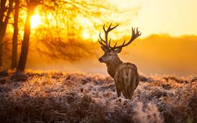 res 1920x1200 cool deer wallpapers 1
