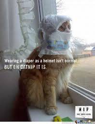 Catnip Memes. Best Collection of Funny Catnip Pictures via Relatably.com