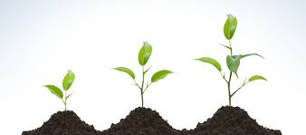 Image result for pictures of growth