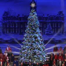 Giant Everest Fir Christmas Tree with LED lights - 17' Giant Everest  Commercial Christmas Tree, C7 Multicolor LED Lights