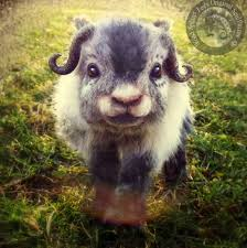 Image result for baby animals pictures